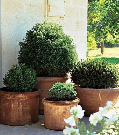 USE TO SOFTEN EDGE OF BRICK PATIO...Boxwood container ideas