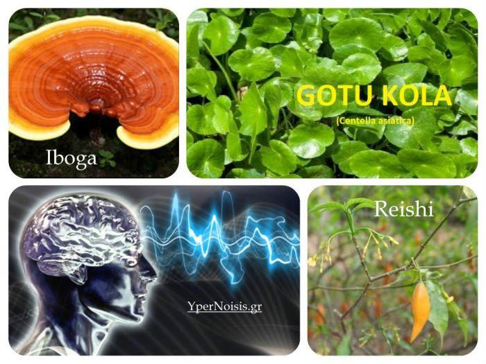 3 αρχαία βότανα για να αυξήσετε τη συνείδηση και να επεκτείνετε την επίγνωση σας