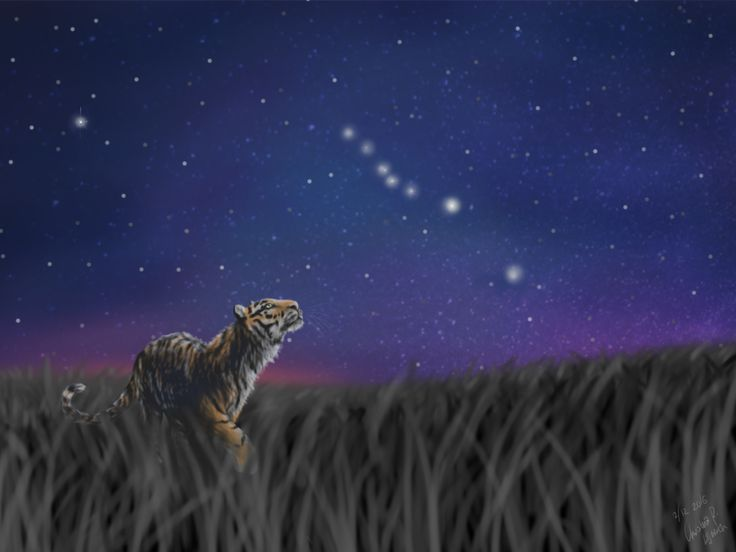 Look at the stars; drawing by ArtWolf