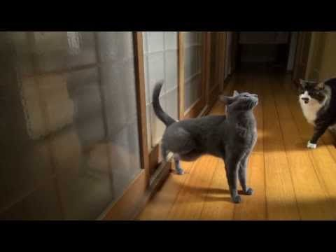 This Kitty Is The Master Of Knocking Door #kitty #funnyvideo