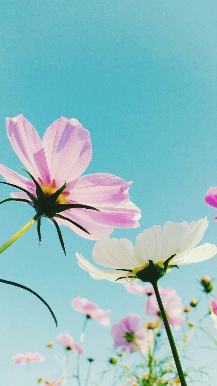 Tapeta Kwiaty Plants