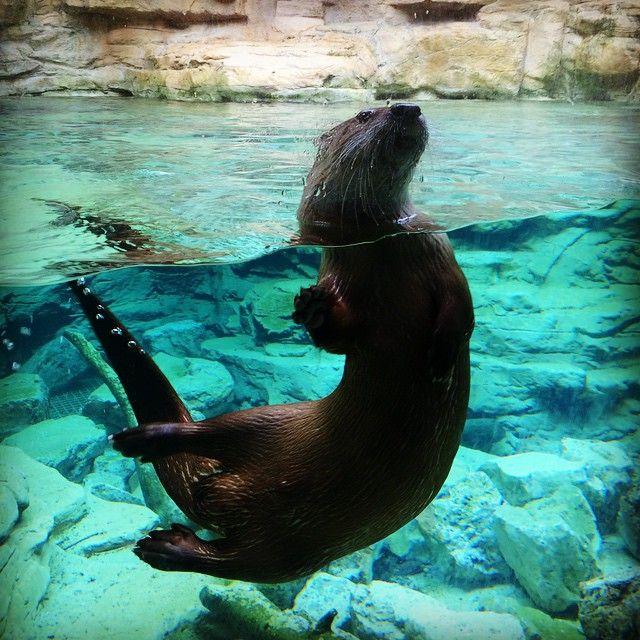 Tour the Minnesota Zoo #OnlyinMN
