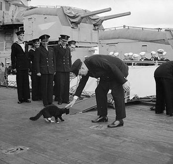 """Unsinkable Sam (aka Oskar/Oscar) - German ship's cat who saw service in both the Kriegsmarine and British Royal Navy during WWII, on the Bismarck, the HMS Cossack and the HMS Ark Royal. Sam survived the sinking of all three. There is some doubt as to whether Sam really existed, or whether his story was not an amalgamation of several different cats created as an exciting """"sea tale"""". (That nearly looks like Churchill patting """"Sam""""....?)"""