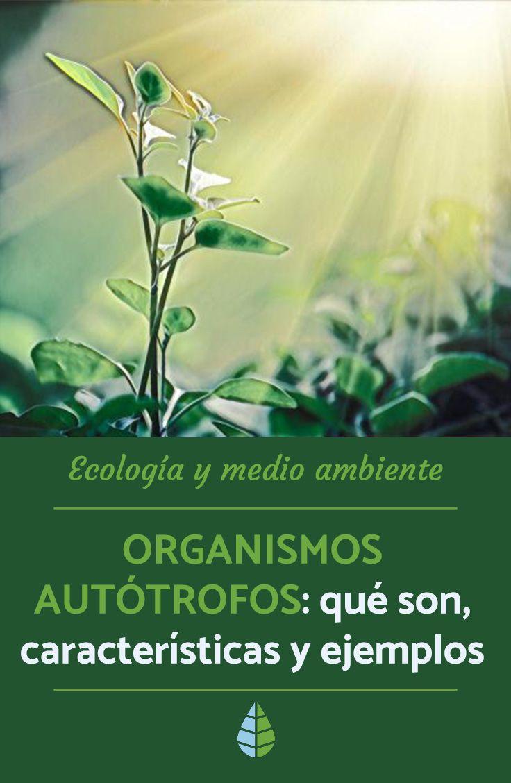 Organismos Autotrofos Que Son Caracteristicas Y Ejemplos Resumen Ecologia Medio Ambiente Naturaleza