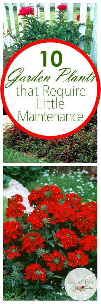 Best 25 low maintenance plants ideas on pinterest easy for Flowers that require low maintenance