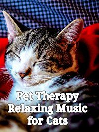 Amazon.com: Pet Therapy: Relaxing Music for Cats: Cats and cats lovers, Relaxing Music for Cats: Amazon   Digital Services LLC