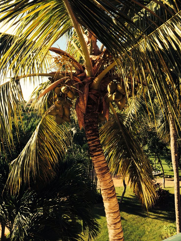 Min palme