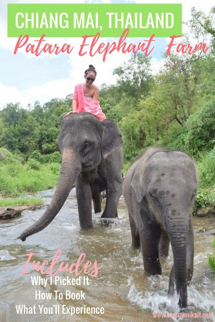 Chiang Mai: Elephant Keeper For A Day - Thanks to my good friend Irene, who recommended I visit Patara Elephant Farm, I had the day of my life!  Highly recommend!