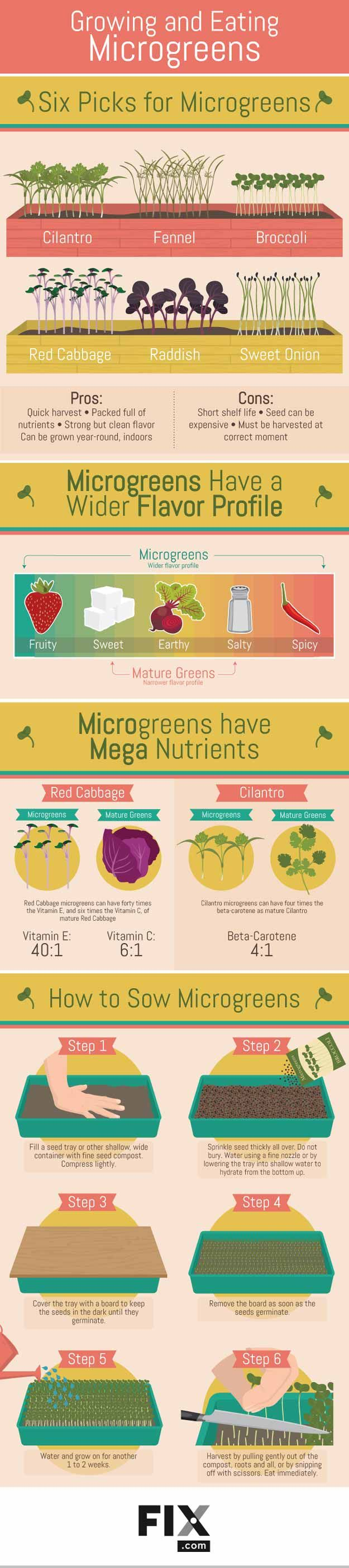 Microgreens Growing Guide For Homesteading How To Plant And Harvest Microgreens - Gardening Tips And Ideas For Beginners And Expert Gardeners by Pioneer Settler at http://pioneersettler.com/need-know-microgreens/