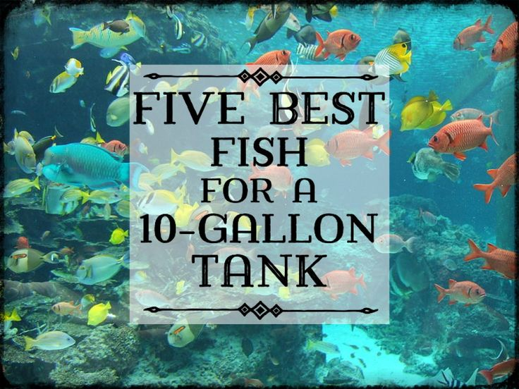 Best 25 10 gallon fish tank ideas on pinterest 1 gallon for Smart fish tank