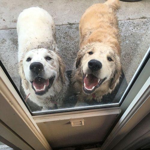 うちの困った犬たち01