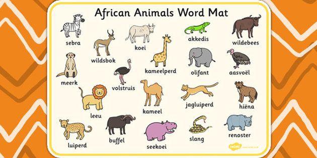 Animals   Afrikaans