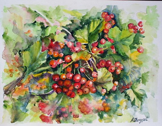Watercolour fruits painting Red currant berries original