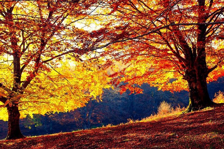 Lothlorien #lordoftherings #lothlorien #laurelin  #telperion #light #sunset #silhouette  #sun #dream #summer #autumn  #holiday  #vacancy #viaggiare #sunset  #nikon  #nikond90 #nikonitalia #twitter