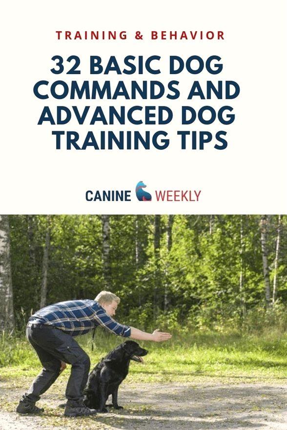 Dog Training In Palm Beach County Dog Training Virginia Beach