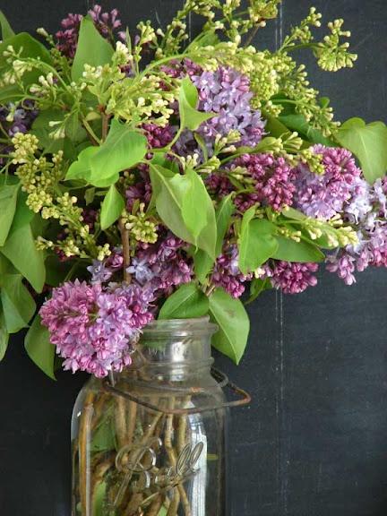 lilacs: Flower Candles, Spring Flower, Lilacs Bush, Flower Lilacs, Farmers Marketing, Lilacs Trees, Flower Mor, Mason Jars, Favorite Flower