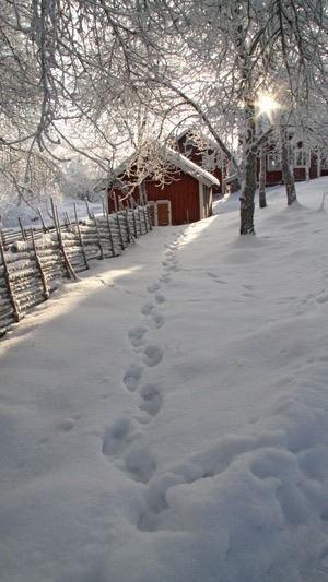 Wintergarden - Sweden