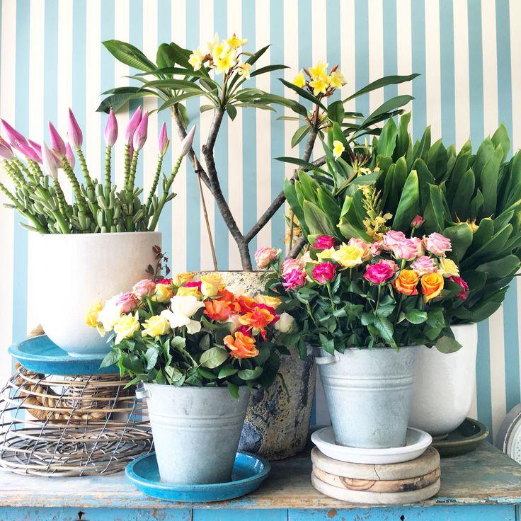 Flower display at The Boathouse Balmoral, Sydney, Australia || @__flowerhead__