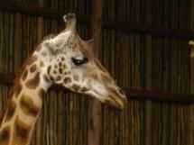 Top Free Things To Do In Chicago: Lincoln Park Zoo