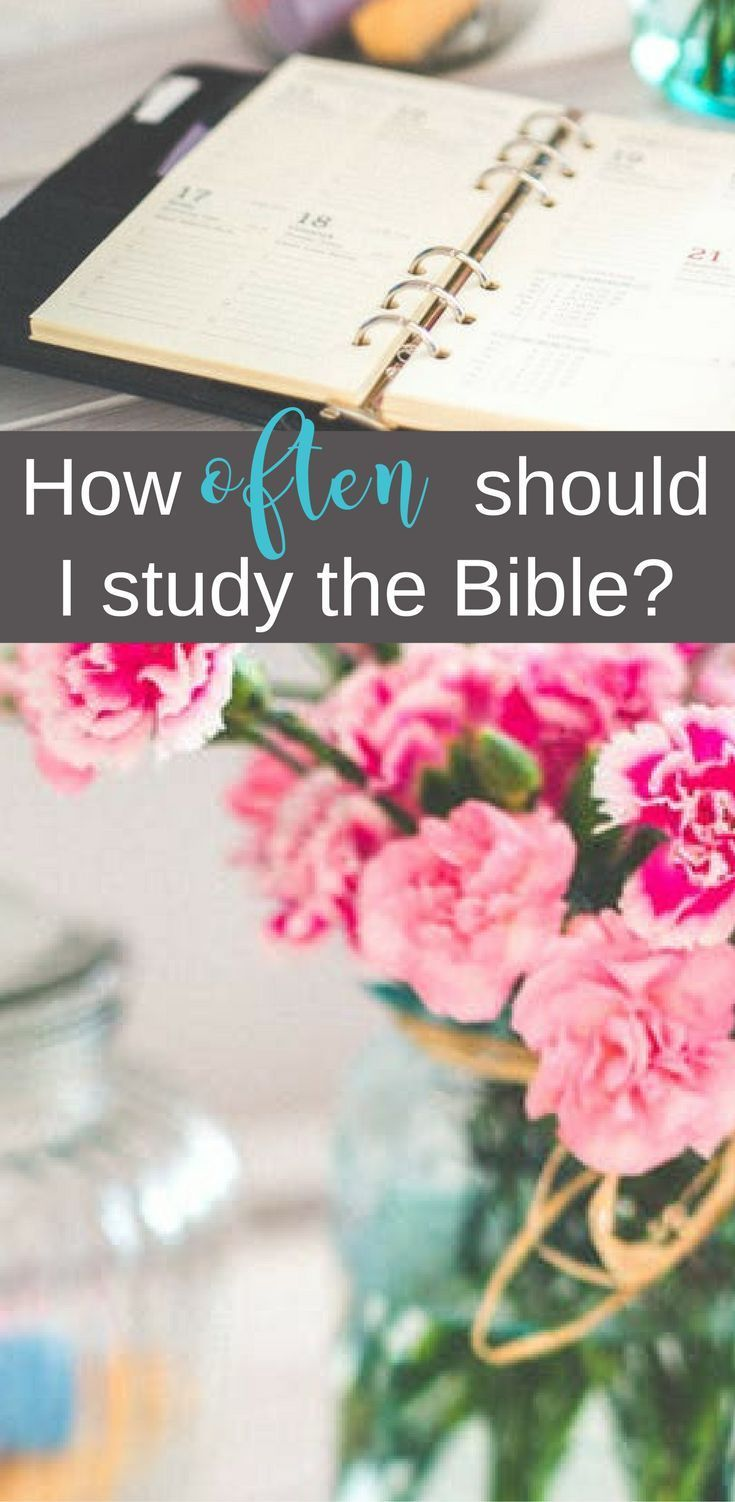 How Often Should I Study the Bible? | Mini-tip Monday | Scripture Confident Living