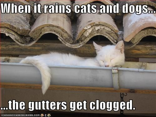 When it rains cats and dogs, the gutters get clogged.