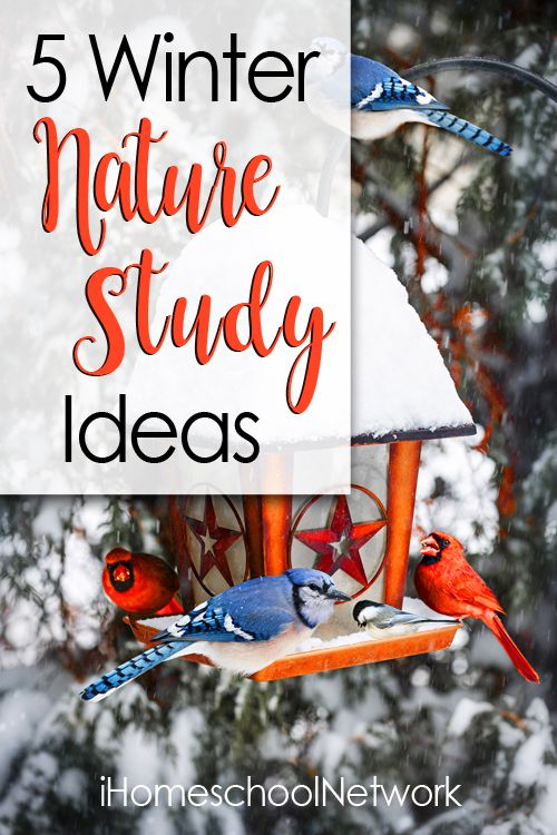 My top 5 winter nature study ideas to keep you active, learning, and having fun even in the cold wintry months - and some of my fave resources.