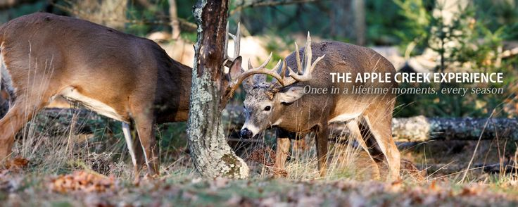 Trophy Whitetail Deer Hunting Trips and Guided Whitetail Deer Hunts at Apple Creek Whitetails Ranch located in Northern Wisconsin a deer hun...