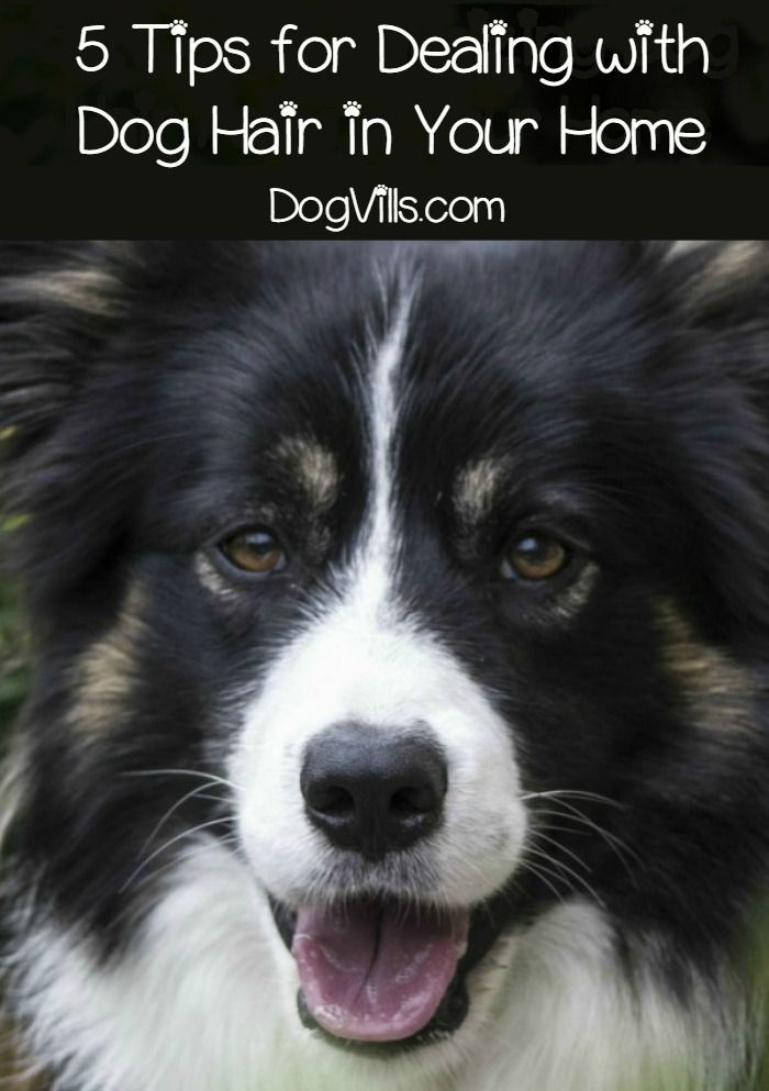 Five tips to minimizing dog hair around your home? Sure why not! We could all use tips like this, am I right? I know for my family, one of the reasons we held off on getting a dog at one point was because of the dog hair. I found ways to tackle it, so it wasn't as much of a problem. I wanted our family to have a dog more than I cared about the shedding issue. So here are my five tips to minimizing dog hair around your home.