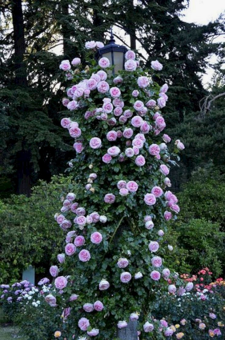 Flowers Are Indispensable Elements Of A Garden These Flowers Generally Have A Bigger Lifespan That Could Extend To Eden Rose Climbing Roses Beautiful Gardens