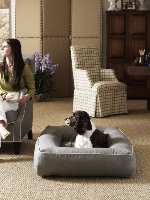 Peek Inside The Plush Pads Of The World's Most Privileged Pups — DESIGNED w/ Carla Aston