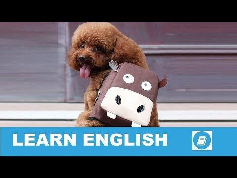 Learn English Vocabulary  - Bags - Talking Flashcards- E-ANGOL