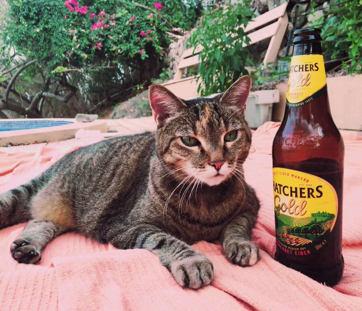 Hoper the Moper loves his bottle of Thatchers Gold Somerset Cider. Here, he celebrates his seventeenth birthday near a swimming pool in Grenada. Who wishes this kitty a happy birthday?
