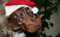Do you buy your pets Christmas presents?