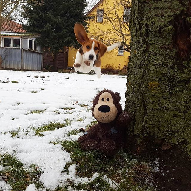 Look Who Came Out To Play In The Snow Beagle Beagle Puppy