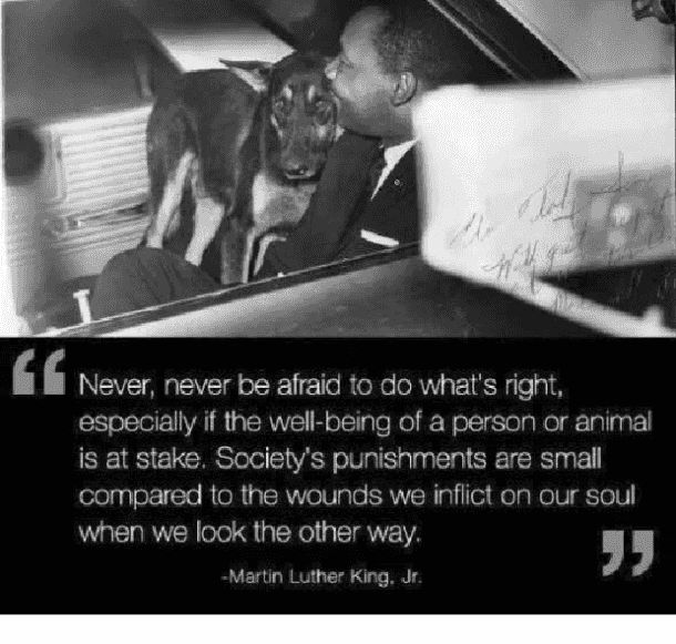 Never, never be afraid to do what's right. Especially if the well-being of a person or animal is at stake. Society's punishments are small compared to the ones we inflict on our soul when we look the other way. — Martin Luther King Jr.