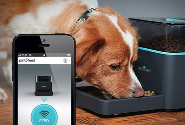 Pintofeed Feed Your Pets From Your Smartphone