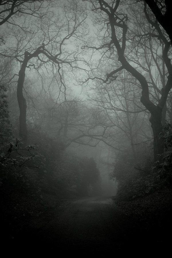 woods #gothic #horror #darkness