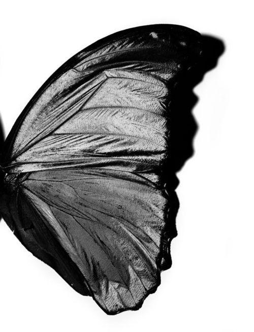 Black | 黒 | Kuro | Nero | Noir | Preto | Ebony | Sable | Onyx | Charcoal | Obsidian | Jet | Raven | Color | Texture | Pattern | Styling | Butterfly | Wing