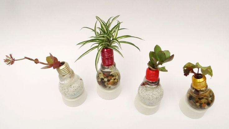 Solounos Plantas en agua - Para los que están empezando su jardín