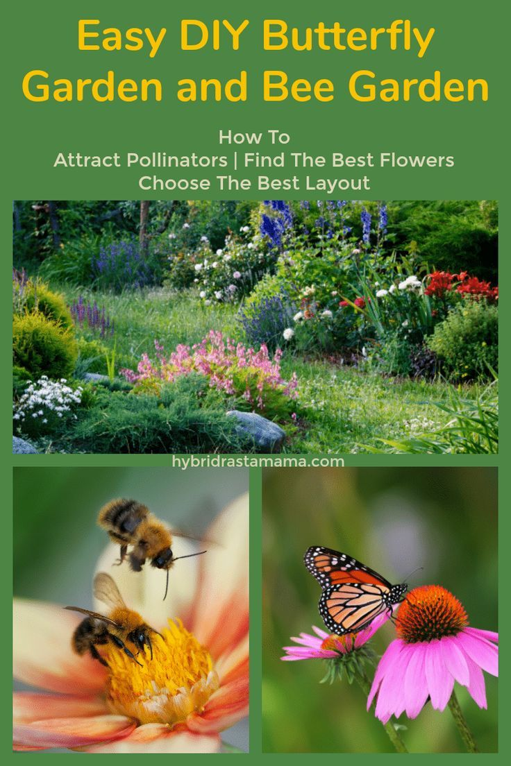 If You Need Information On How To Build The Perfect Butterfly Garden How To Start A Bee Garden How To At Pollinator Garden Butterfly Garden Plants Bee Garden