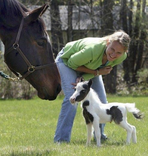 guinness Einstein, cavallo più piccolo del mondo- Cerca con Google