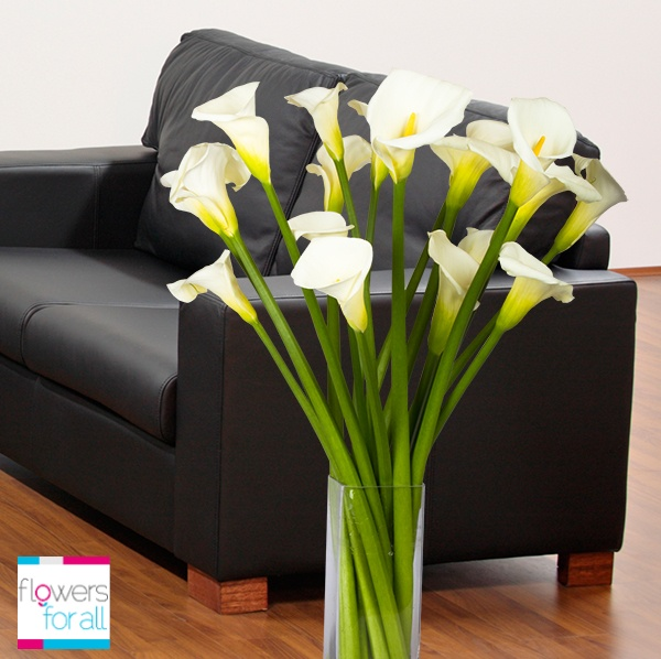 Stunning long stem calla lilies will bring elegance to your room. Find them at Flowersforall.com!