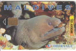 MALDIVES ISL. - Moray Eel, CN : 256MLDGIB, Used