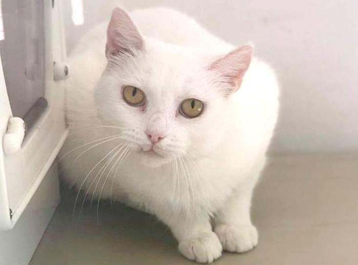 Image Of Storm Cat Adoption White Cats Dog Cat