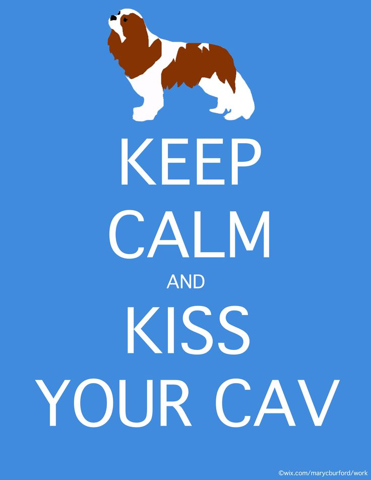 for sophie! #cavalier #keepcalm