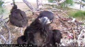 Southwest Florida Eagle Cam - Live Feed