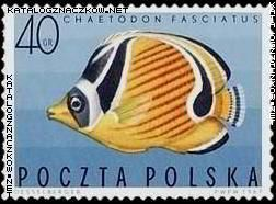 ryby egzotyczne