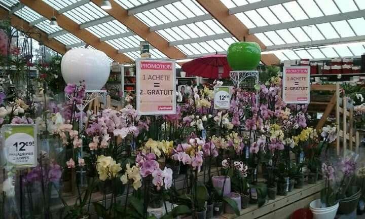 24 best JARDILAND Lanester Fleurs d\u0027Intérieur images on Pinterest