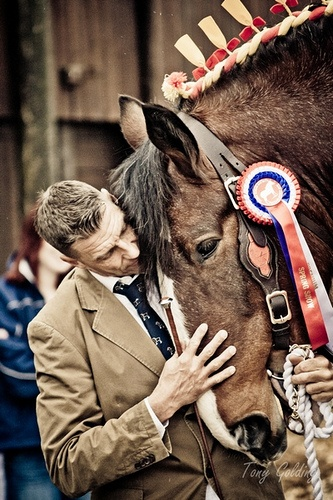 RIP Tony Golding 5/30/2014 https://www.flickr.com/photos/heavyhorsephotography/   Not long now till the 2013 Shire Horse Spring Show :-)) http://profile.pages.me.uk/2012/Shire%20Horse%20Society/Schedule.pdf