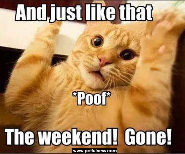 Newest And Funniest Cat Memes Collection To Welcome 2020 Funny Monday Memes Monday Humor Funny Weekend Memes
